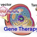 GT gene therapy AAV